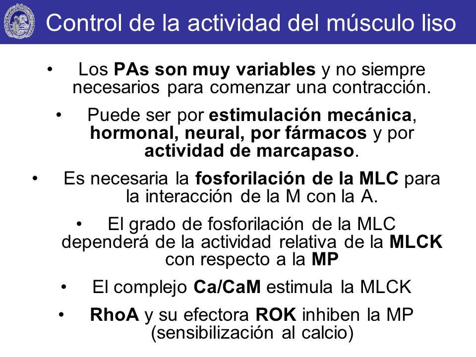 Control de la actividad del músculo liso Los PAs son muy variables y no siempre necesarios para comenzar una contracción. Puede ser por estimulación m