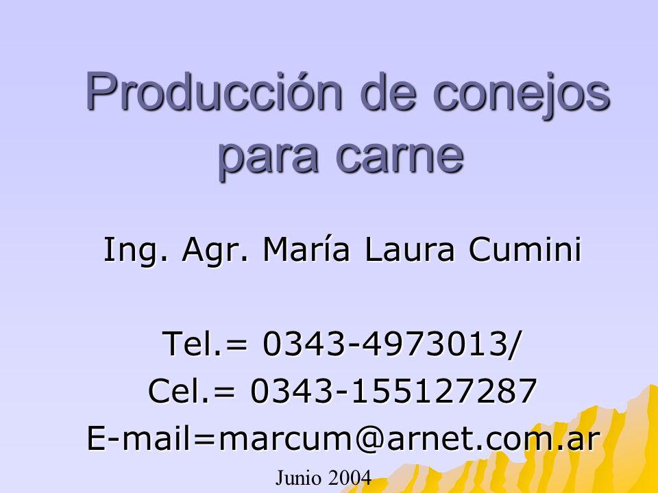 Producción de conejos para carne Producción de conejos para carne Ing. Agr. María Laura Cumini Tel.= 0343-4973013/ Cel.= 0343-155127287 E-mail=marcum@
