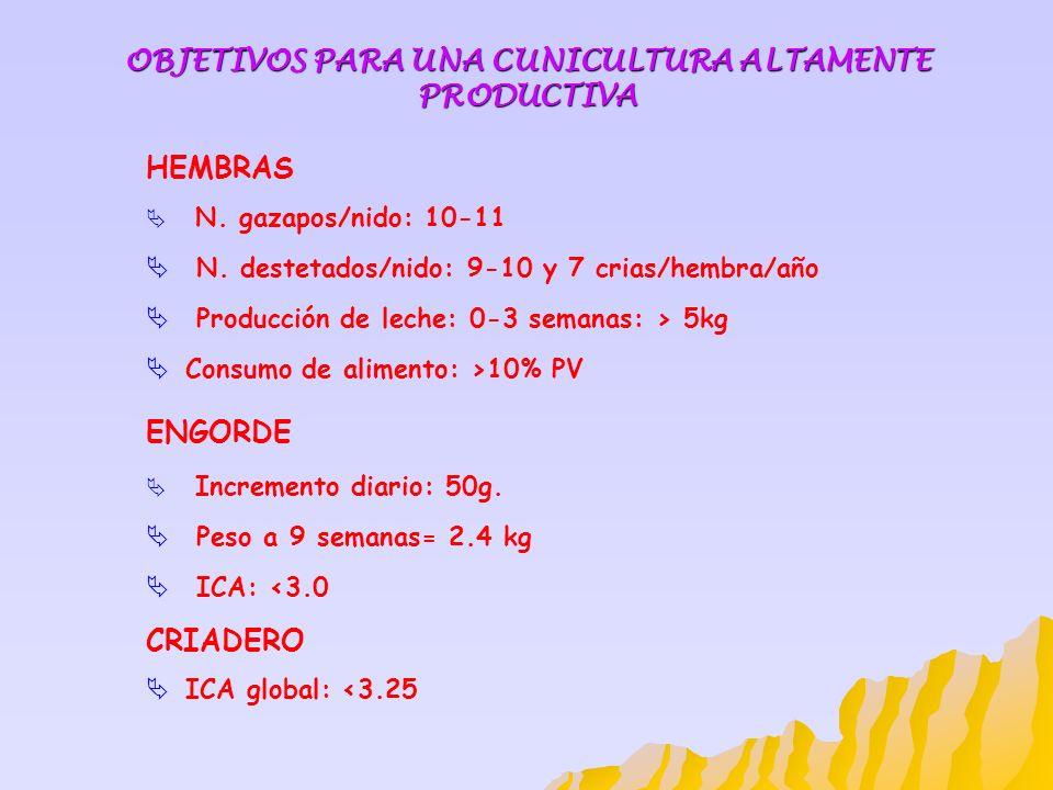 OBJETIVOS PARA UNA CUNICULTURA ALTAMENTE PRODUCTIVA HEMBRAS N. gazapos/nido: 10-11 N. destetados/nido: 9-10 y 7 crias/hembra/año Producción de leche: