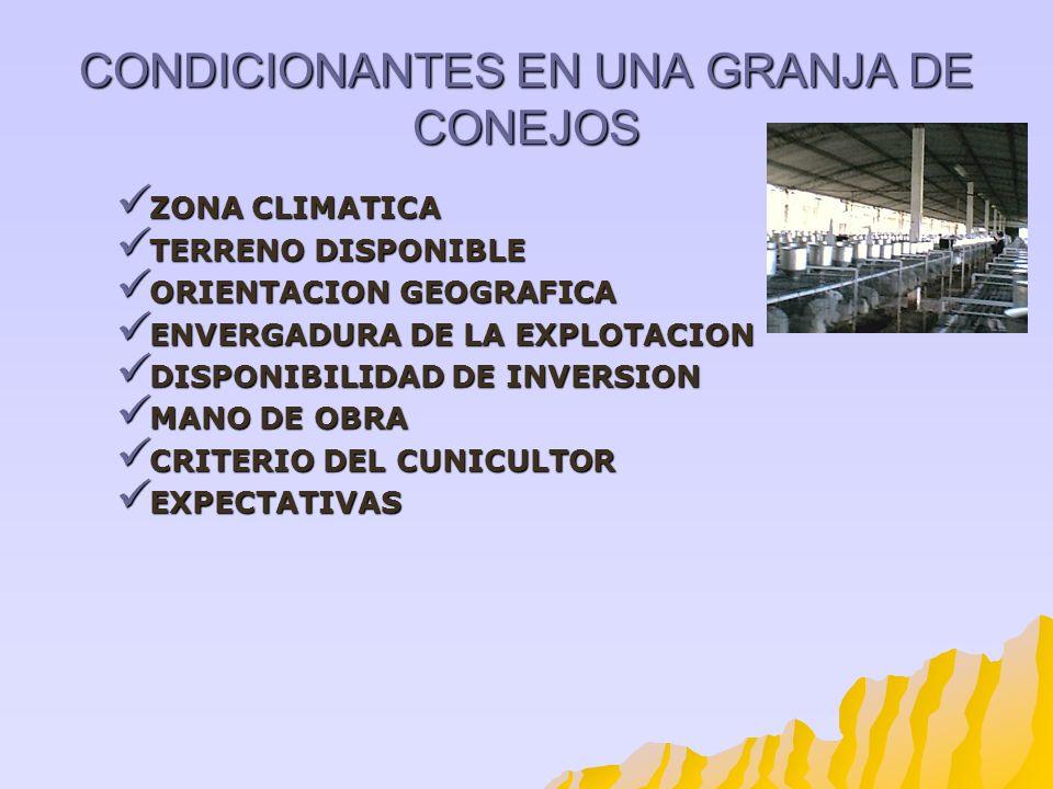 CONDICIONANTES EN UNA GRANJA DE CONEJOS ZONA CLIMATICA ZONA CLIMATICA TERRENO DISPONIBLE TERRENO DISPONIBLE ORIENTACION GEOGRAFICA ORIENTACION GEOGRAF