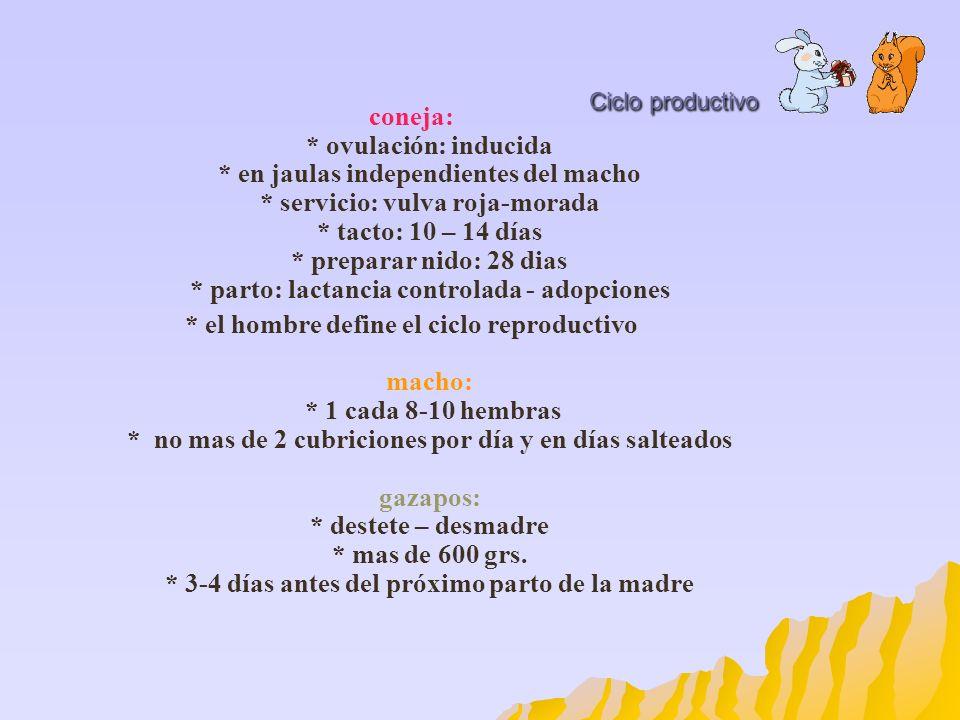Ciclo productivo coneja: * ovulación: inducida * en jaulas independientes del macho * servicio: vulva roja-morada * tacto: 10 – 14 días * preparar nid