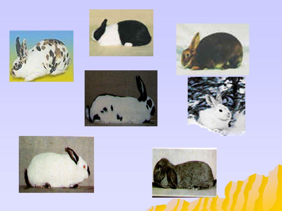Que tener en cuenta para criar conejos 1.-Misión del proyecto La legalización de la actividad como explotación cunícola, comercial y reconocida.