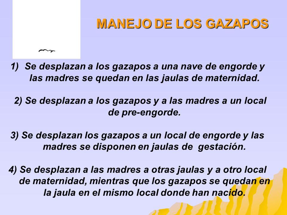 1)Se desplazan a los gazapos a una nave de engorde y las madres se quedan en las jaulas de maternidad. 2) Se desplazan a los gazapos y a las madres a