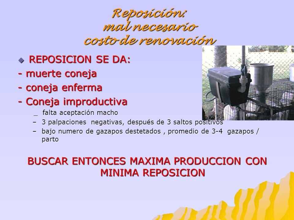 Reposición: mal necesario costo de renovación REPOSICION SE DA: REPOSICION SE DA: - muerte coneja - coneja enferma - Coneja improductiva _ falta acept