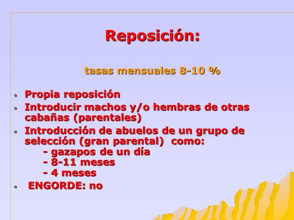 Reposición: tasas mensuales 8-10 % Propia reposición Propia reposición Introducir machos y/o hembras de otras cabañas (parentales) Introducir machos y