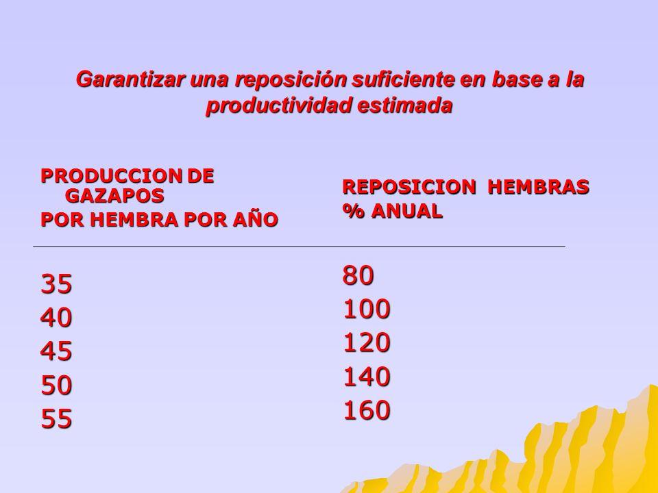 Garantizar una reposición suficiente en base a la productividad estimada PRODUCCION DE GAZAPOS POR HEMBRA POR AÑO 3540455055 REPOSICION HEMBRAS % ANUA