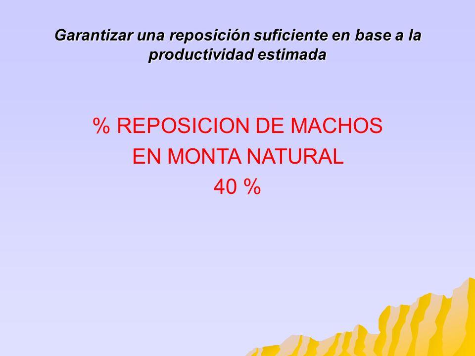 Garantizar una reposición suficiente en base a la productividad estimada % REPOSICION DE MACHOS EN MONTA NATURAL 40 %