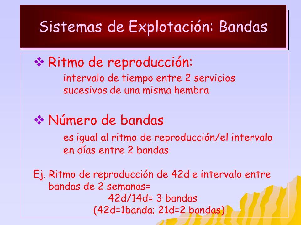 Sistemas de Explotación: Bandas Ritmo de reproducción: intervalo de tiempo entre 2 servicios sucesivos de una misma hembra Número de bandas es igual a