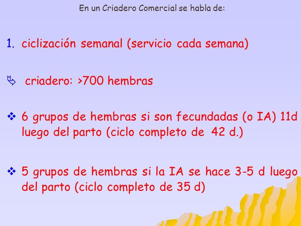 En un Criadero Comercial se habla de: 1.ciclización semanal (servicio cada semana) criadero: >700 hembras 6 grupos de hembras si son fecundadas (o IA)
