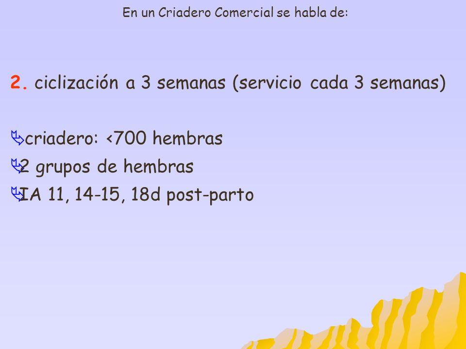 En un Criadero Comercial se habla de: 2. ciclización a 3 semanas (servicio cada 3 semanas) criadero: <700 hembras 2 grupos de hembras IA 11, 14-15, 18