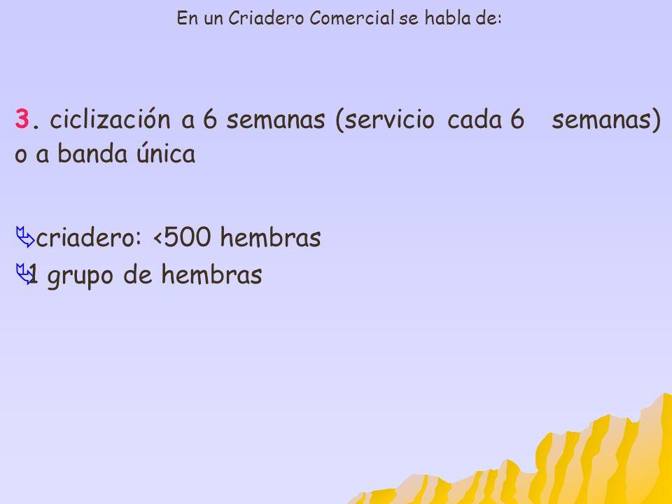 En un Criadero Comercial se habla de: 3. ciclización a 6 semanas (servicio cada 6semanas) o a banda única criadero: <500 hembras 1 grupo de hembras