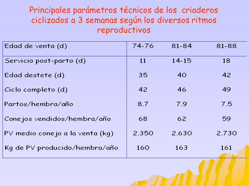 Principales parámetros técnicos de los criaderos ciclizados a 3 semanas según los diversos ritmos reproductivos