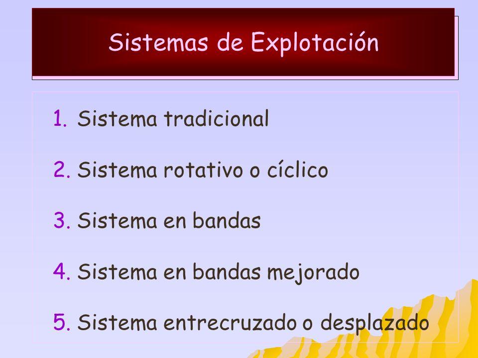 Sistemas de Explotación 1.Sistema tradicional 2.Sistema rotativo o cíclico 3.Sistema en bandas 4.Sistema en bandas mejorado 5.Sistema entrecruzado o d