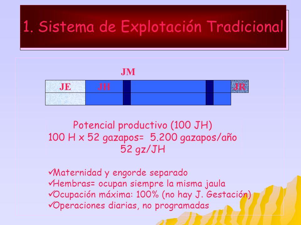 1. Sistema de Explotación Tradicional JEJHJR Maternidad y engorde separado Hembras= ocupan siempre la misma jaula Ocupación máxima: 100% (no hay J. Ge
