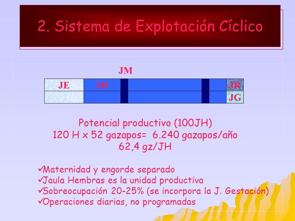 2. Sistema de Explotación Cíclico JEJHJR Maternidad y engorde separado Jaula Hembras es la unidad productiva Sobreocupación 20-25% (se incorpora la J.
