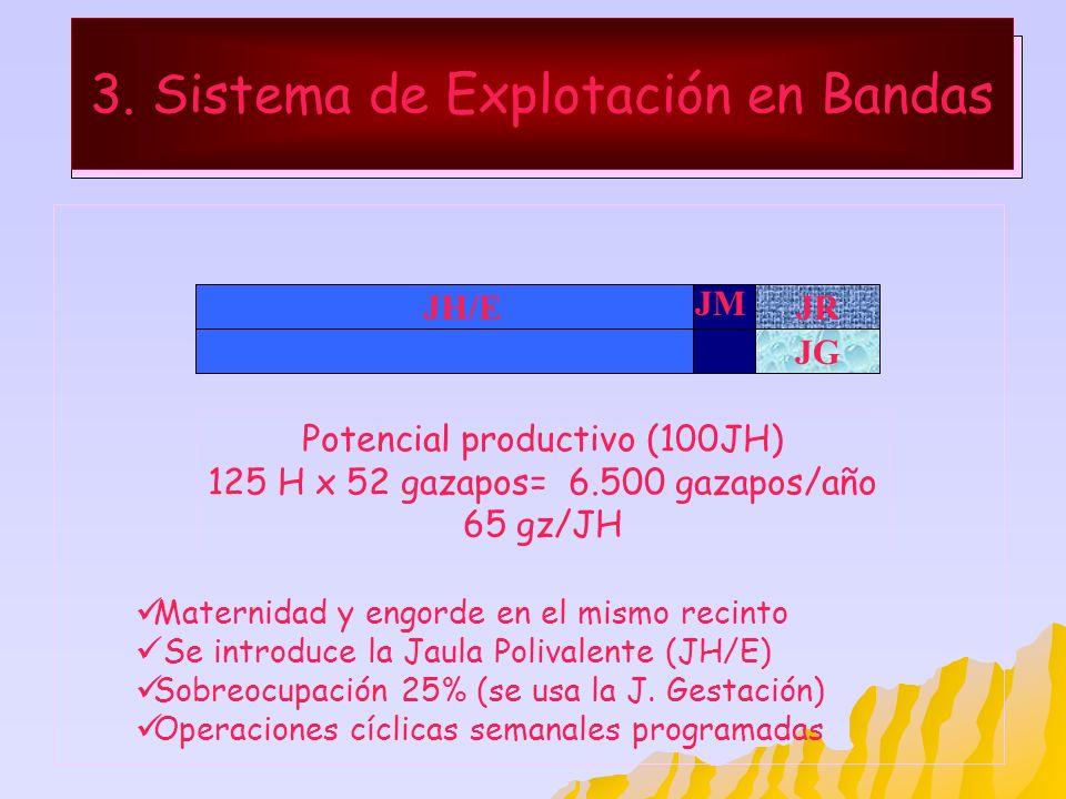 3. Sistema de Explotación en Bandas JH/EJR Maternidad y engorde en el mismo recinto Se introduce la Jaula Polivalente (JH/E) Sobreocupación 25% (se us