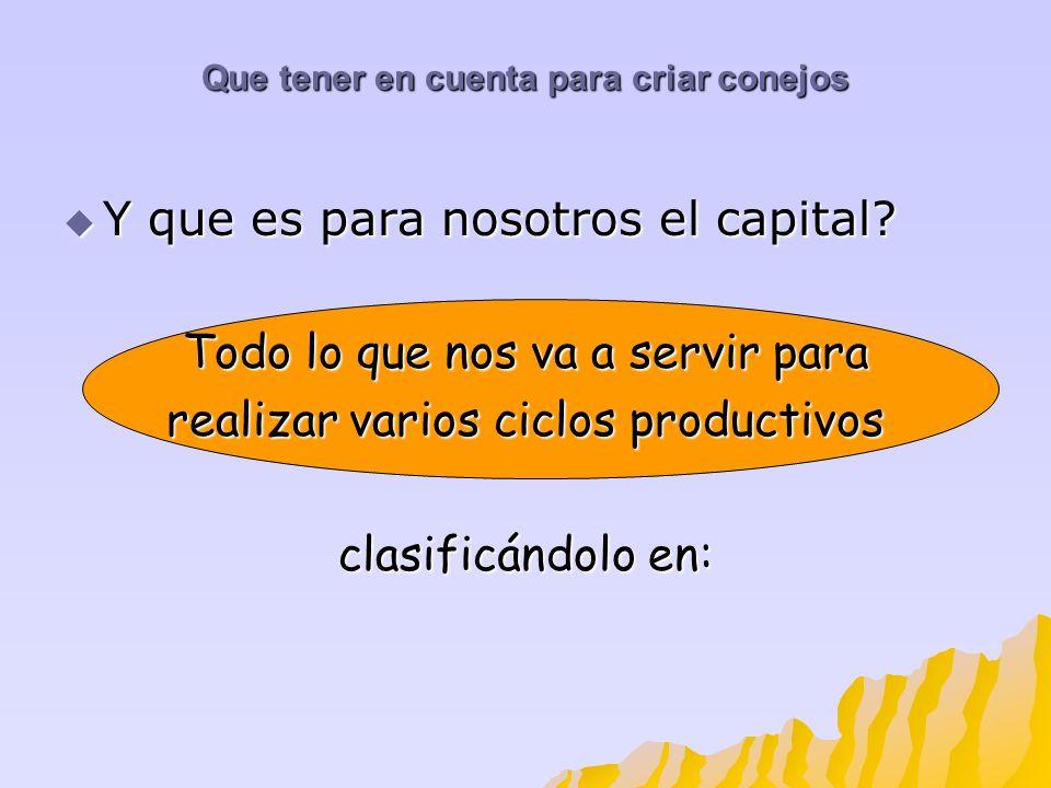 Que tener en cuenta para criar conejos Y que es para nosotros el capital? Y que es para nosotros el capital? Todo lo que nos va a servir para realizar