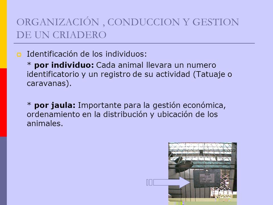 ORGANIZACIÓN, CONDUCCION Y GESTION DE UN CRIADERO Identificación de los individuos: * por individuo: Cada animal llevara un numero identificatorio y u