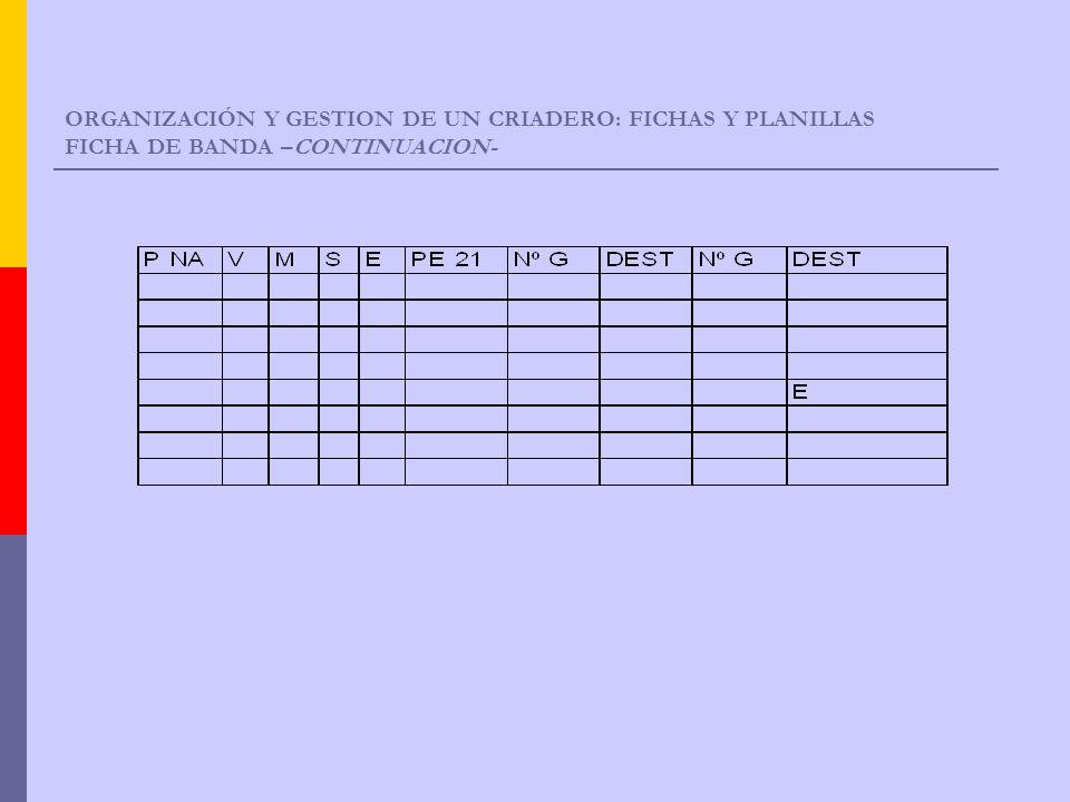 ORGANIZACIÓN Y GESTION DE UN CRIADERO: FICHAS Y PLANILLAS FICHA DE BANDA –CONTINUACION-