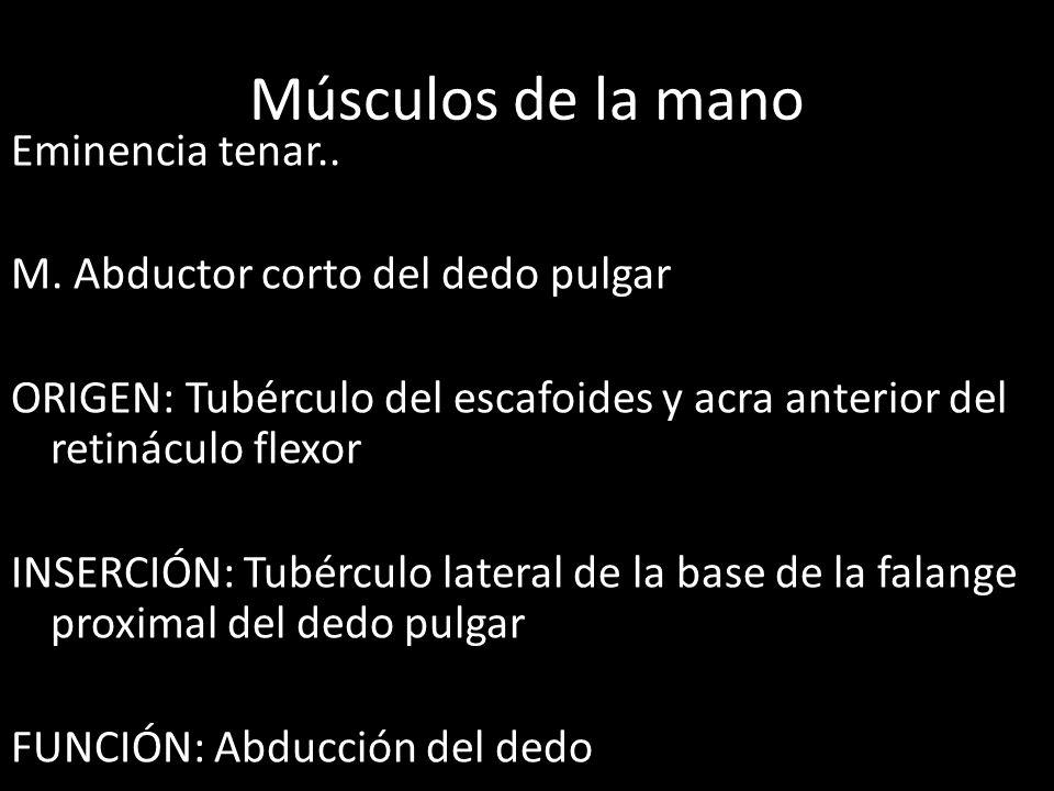 Músculos de la mano Eminencia tenar.. M. Abductor corto del dedo pulgar ORIGEN: Tubérculo del escafoides y acra anterior del retináculo flexor INSERCI