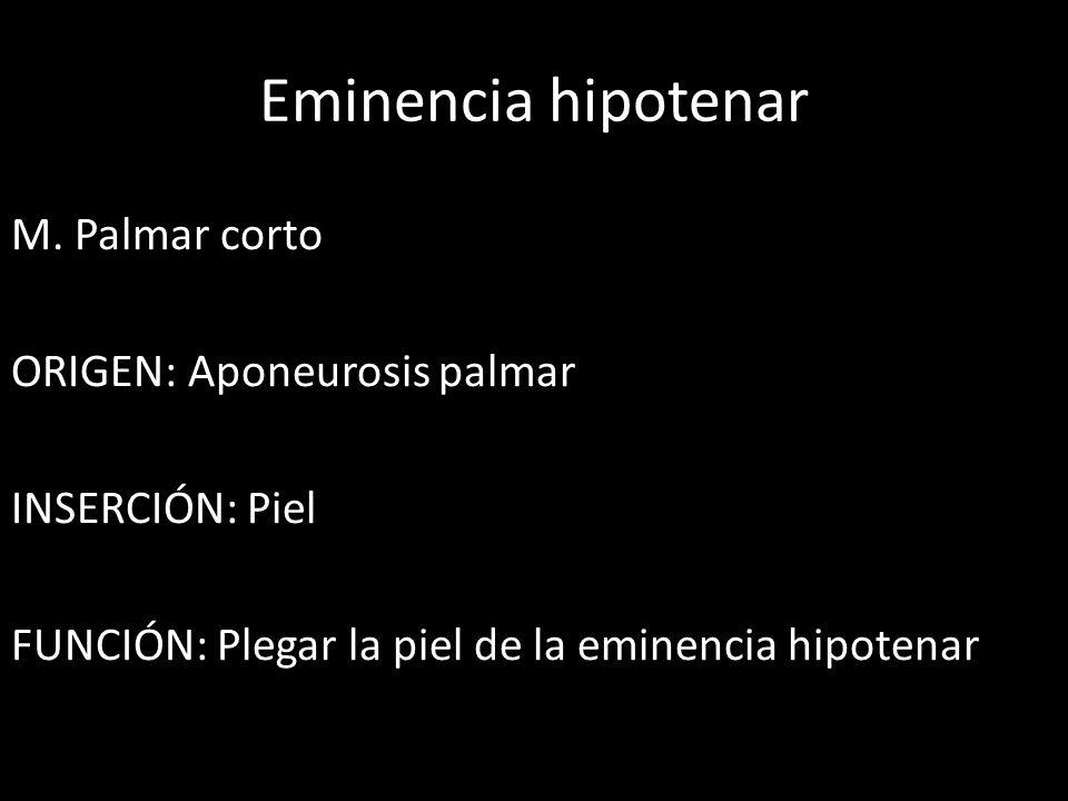 Eminencia hipotenar M. Palmar corto ORIGEN: Aponeurosis palmar INSERCIÓN: Piel FUNCIÓN: Plegar la piel de la eminencia hipotenar