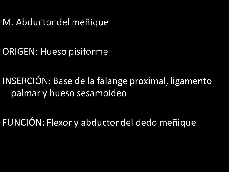 M. Abductor del meñique ORIGEN: Hueso pisiforme INSERCIÓN: Base de la falange proximal, ligamento palmar y hueso sesamoideo FUNCIÓN: Flexor y abductor