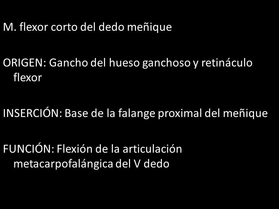 M. flexor corto del dedo meñique ORIGEN: Gancho del hueso ganchoso y retináculo flexor INSERCIÓN: Base de la falange proximal del meñique FUNCIÓN: Fle