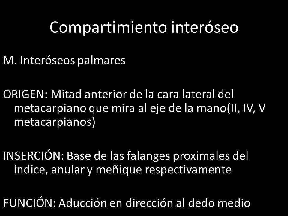 Compartimiento interóseo M. Interóseos palmares ORIGEN: Mitad anterior de la cara lateral del metacarpiano que mira al eje de la mano(II, IV, V metaca