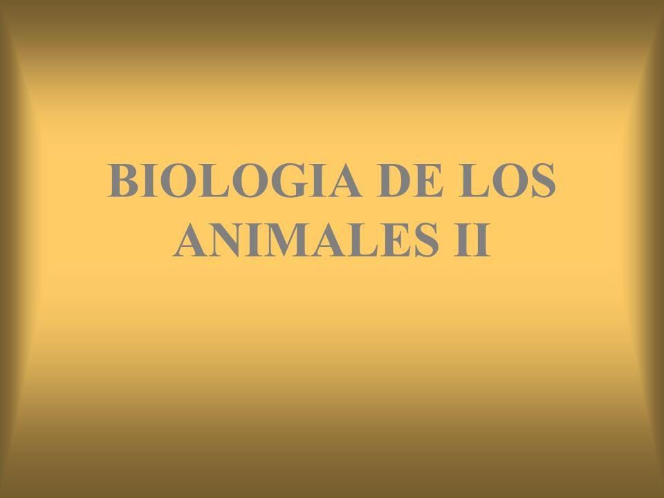 BIOLOGIA DE LOS ANIMALES II