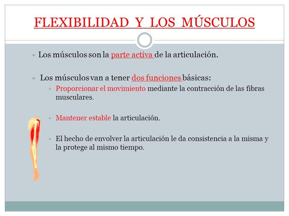 FLEXIBILIDAD Y LOS MÚSCULOS Los músculos son la parte activa de la articulación. Los músculos van a tener dos funciones básicas: Proporcionar el movim