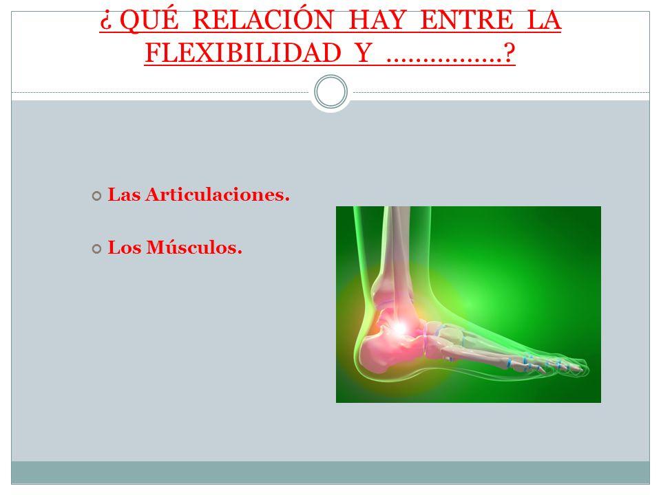FLEXIBILIDAD Y LAS ARTICULACIONES La función de las articulaciones es unir los huesos.