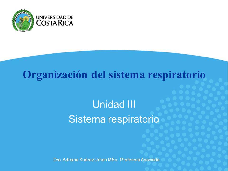 Organización del sistema respiratorio Unidad III Sistema respiratorio Dra. Adriana Suárez Urhan MSc. Profesora Asociada