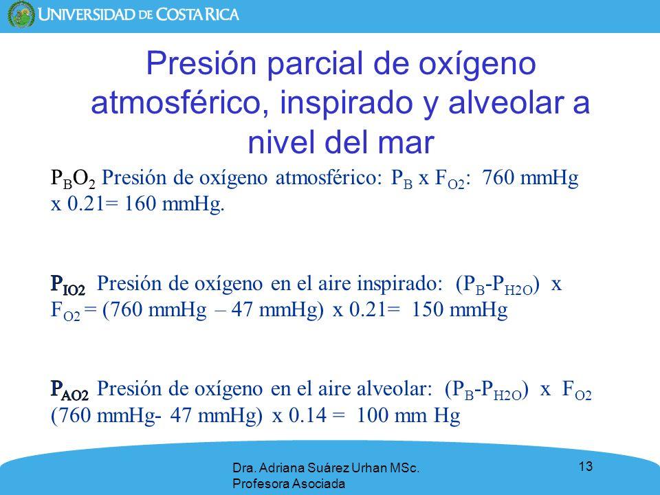 13 Presión parcial de oxígeno atmosférico, inspirado y alveolar a nivel del mar Dra. Adriana Suárez Urhan MSc. Profesora Asociada