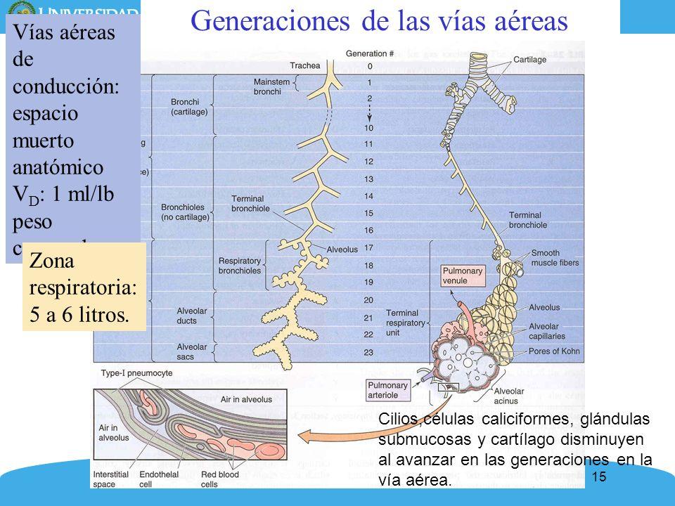 15 Generaciones de las vías aéreas Vías aéreas de conducción: espacio muerto anatómico V D : 1 ml/lb peso corporal Zona respiratoria: 5 a 6 litros. Ci