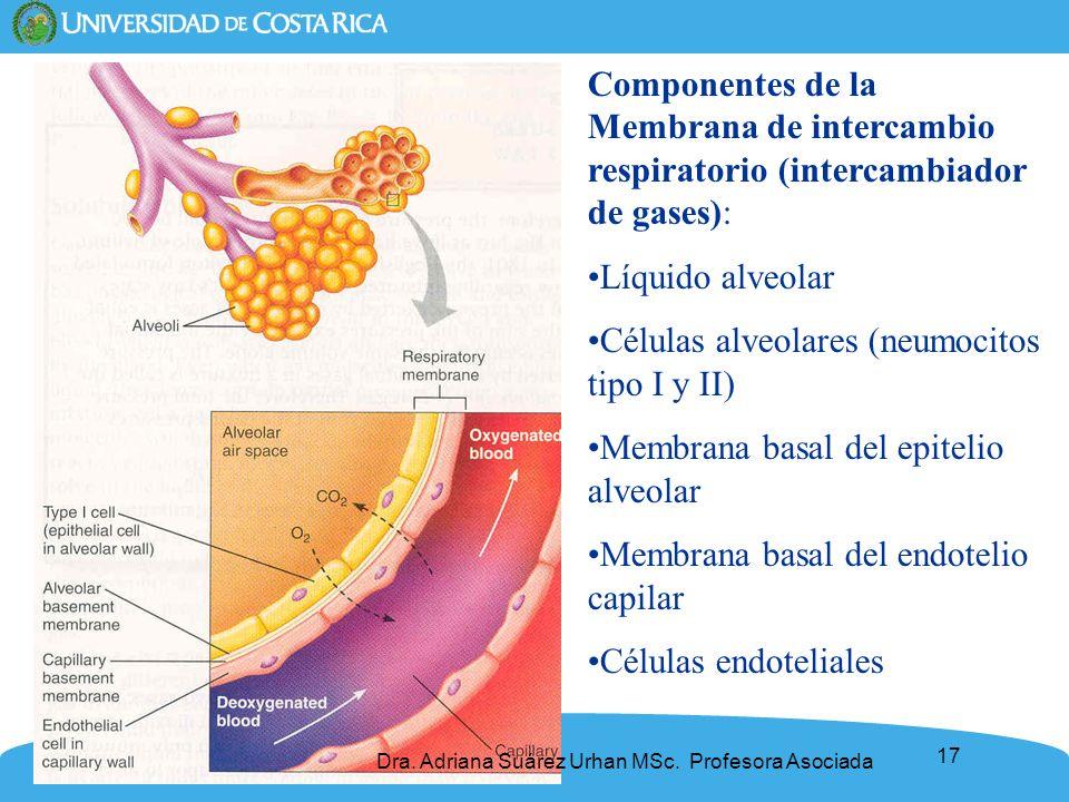 17 Componentes de la Membrana de intercambio respiratorio (intercambiador de gases): Líquido alveolar Células alveolares (neumocitos tipo I y II) Memb