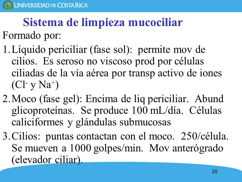 25 Sistema de limpieza mucociliar Formado por: 1.Líquido periciliar (fase sol): permite mov de cilios. Es seroso no viscoso prod por células ciliadas