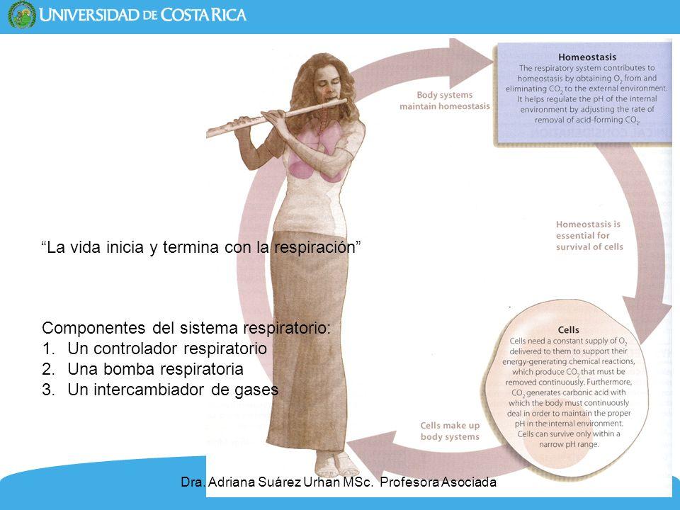 4 La vida inicia y termina con la respiración Dra. Adriana Suárez Urhan MSc. Profesora Asociada Componentes del sistema respiratorio: 1.Un controlador