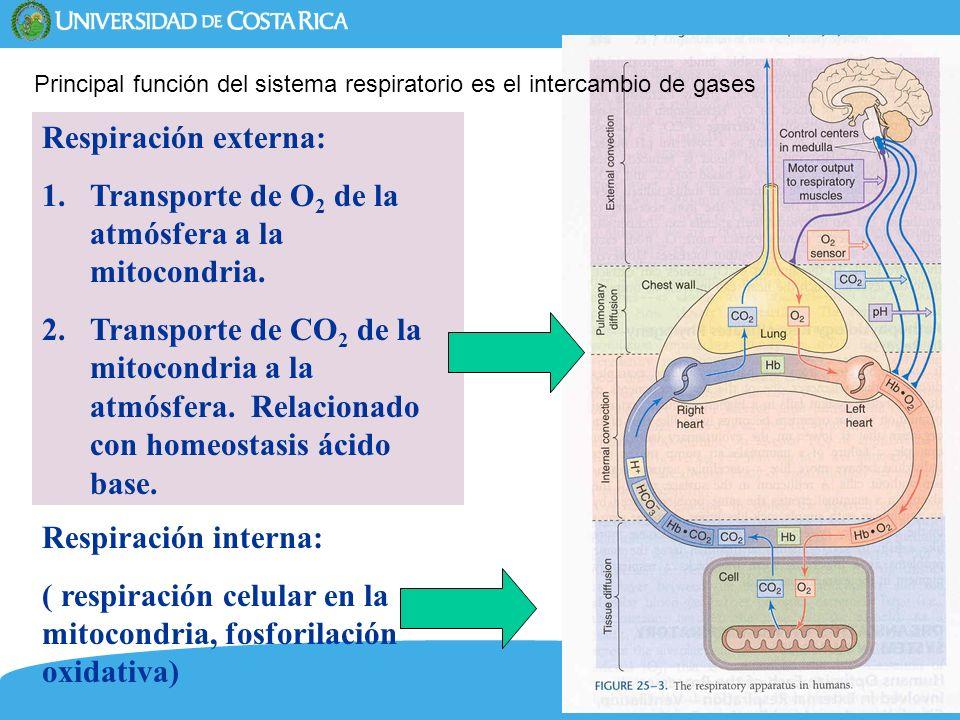 5 Respiración externa: 1.Transporte de O 2 de la atmósfera a la mitocondria. 2.Transporte de CO 2 de la mitocondria a la atmósfera. Relacionado con ho