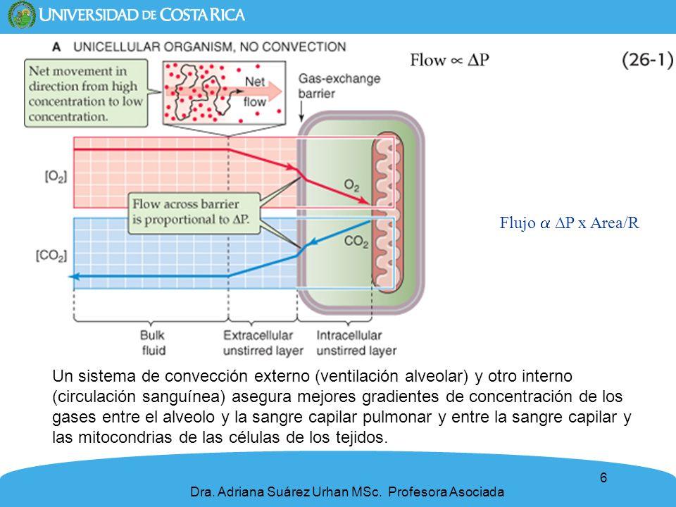 6 Dra. Adriana Suárez Urhan MSc. Profesora Asociada Flujo P x Area/R Un sistema de convección externo (ventilación alveolar) y otro interno (circulaci