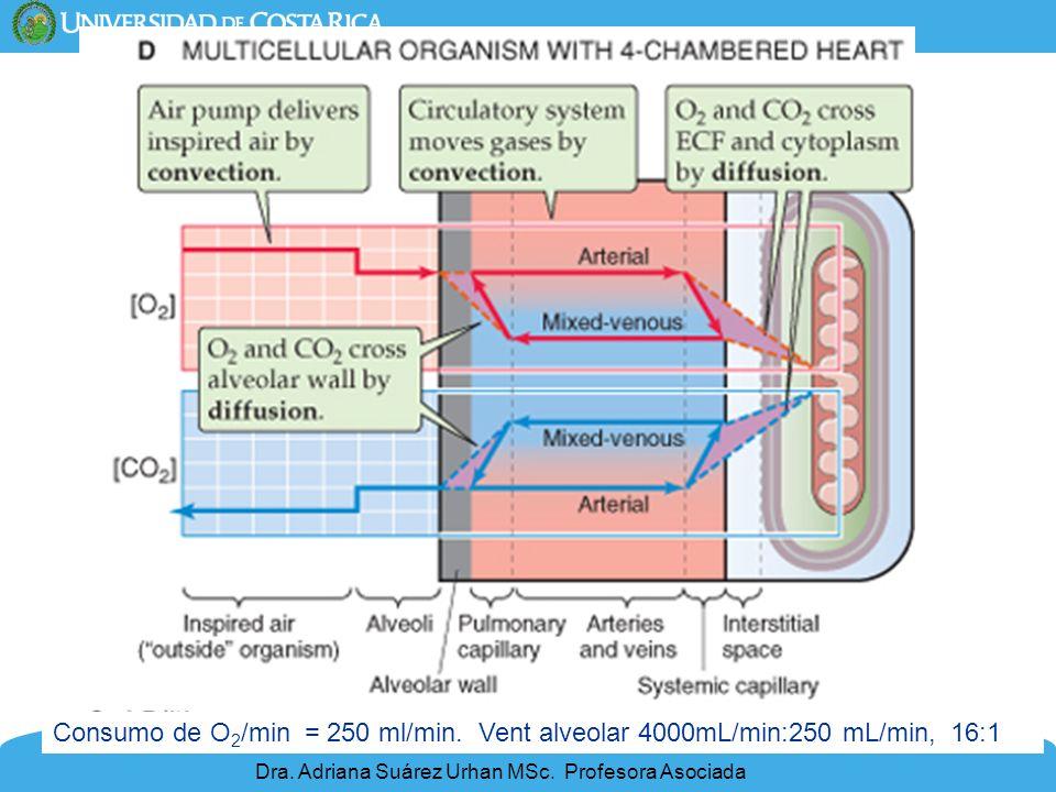9 Consumo de O 2 /min = 250 ml/min. Vent alveolar 4000mL/min:250 mL/min, 16:1