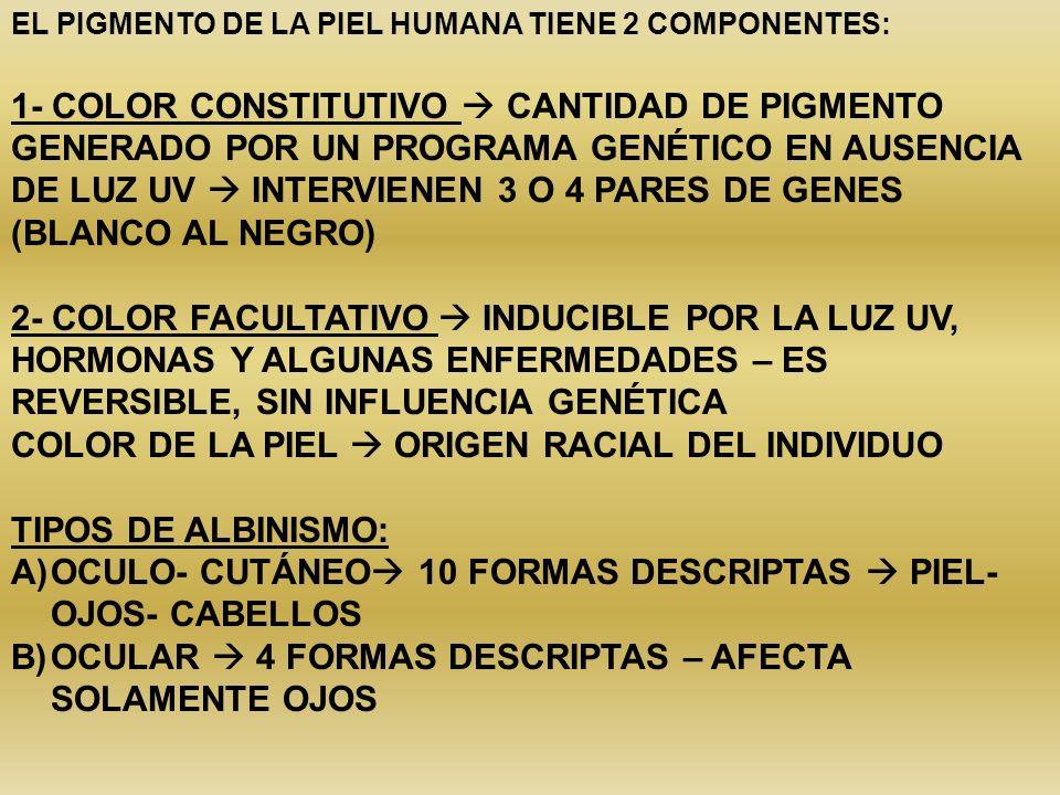 EL PIGMENTO DE LA PIEL HUMANA TIENE 2 COMPONENTES: 1- COLOR CONSTITUTIVO CANTIDAD DE PIGMENTO GENERADO POR UN PROGRAMA GENÉTICO EN AUSENCIA DE LUZ UV