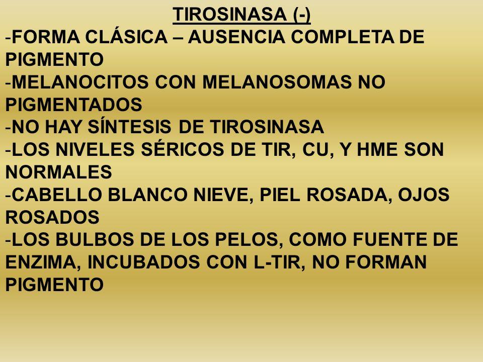 TIROSINASA (-) -FORMA CLÁSICA – AUSENCIA COMPLETA DE PIGMENTO -MELANOCITOS CON MELANOSOMAS NO PIGMENTADOS -NO HAY SÍNTESIS DE TIROSINASA -LOS NIVELES