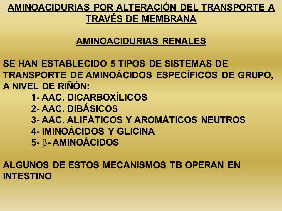 AMINOACIDURIAS POR ALTERACIÓN DEL TRANSPORTE A TRAVÉS DE MEMBRANA AMINOACIDURIAS RENALES SE HAN ESTABLECIDO 5 TIPOS DE SISTEMAS DE TRANSPORTE DE AMINO