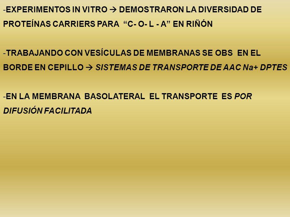 -EXPERIMENTOS IN VITRO DEMOSTRARON LA DIVERSIDAD DE PROTEÍNAS CARRIERS PARA C- O- L - A EN RIÑÓN -TRABAJANDO CON VESÍCULAS DE MEMBRANAS SE OBS EN EL B