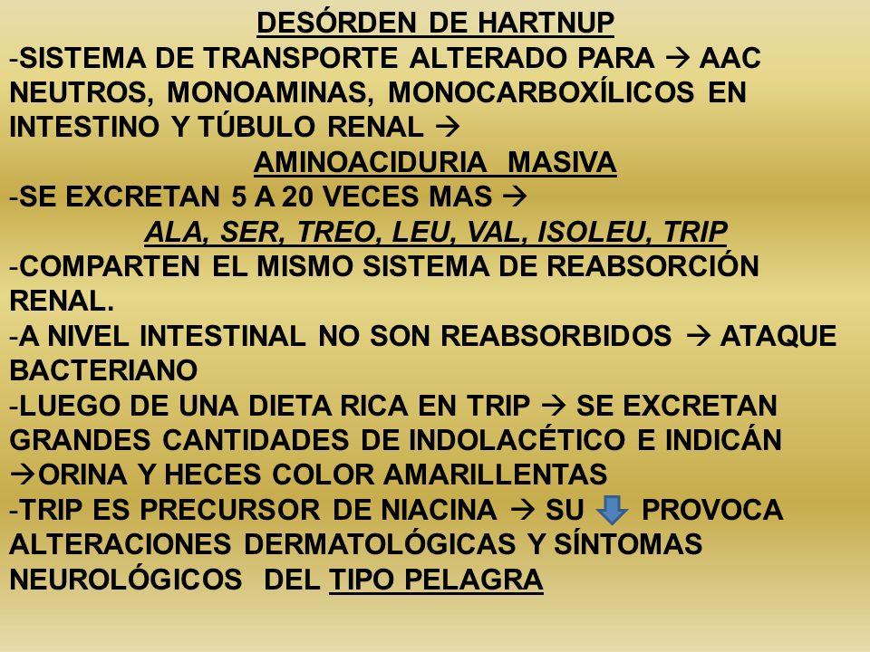 DESÓRDEN DE HARTNUP -SISTEMA DE TRANSPORTE ALTERADO PARA AAC NEUTROS, MONOAMINAS, MONOCARBOXÍLICOS EN INTESTINO Y TÚBULO RENAL AMINOACIDURIA MASIVA -S