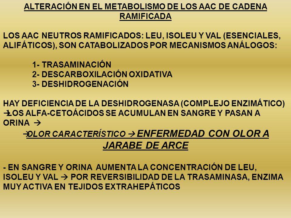 ALTERACIÓN EN EL METABOLISMO DE LOS AAC DE CADENA RAMIFICADA LOS AAC NEUTROS RAMIFICADOS: LEU, ISOLEU Y VAL (ESENCIALES, ALIFÁTICOS), SON CATABOLIZADO