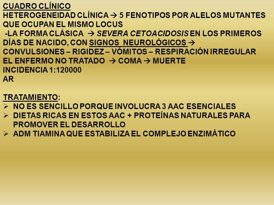 CUADRO CLÍNICO HETEROGENEIDAD CLÍNICA 5 FENOTIPOS POR ALELOS MUTANTES QUE OCUPAN EL MISMO LOCUS -LA FORMA CLÁSICA SEVERA CETOACIDOSIS EN LOS PRIMEROS