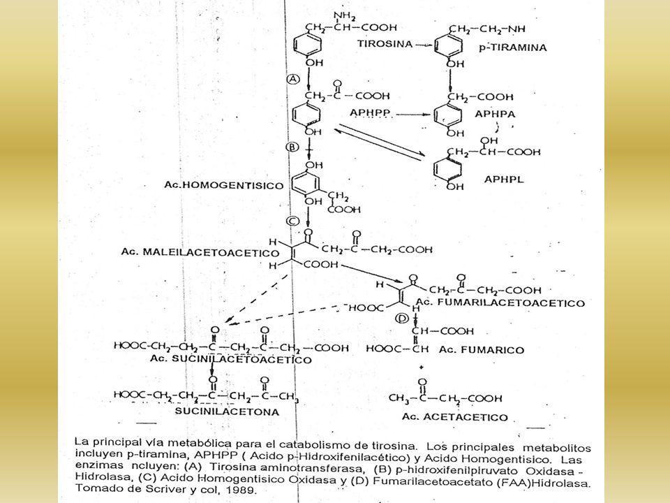 ASPECTOS BIOQUÍMICOS -ORINA: TIROSINURIA, P-OH-FENILACÉTICO Y LÁCTICO -ALTERADA REABSORCIÓN TUBULAR PROTEINURIA - GLUCOSURIA – HIPERFOSFATURIA – AAC.