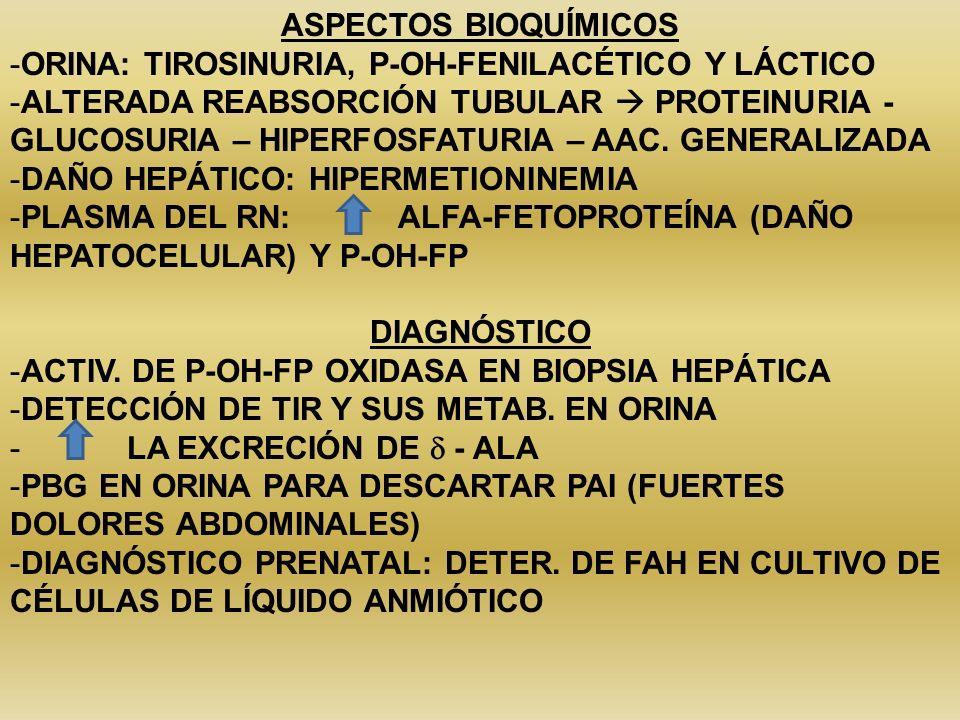 3- TIROSINEMIA TRANSITORIA -FRECUENTE – INMADUREZ GESTACIONAL -PREMATUROS: 30% TIR -RN A TÉRMINO: 10% TIR -LETARGIA Y MOVIMIENTOS ERRÁTICOS -TRATAMIENTO: REDUCIR LA INGESTA PROTEICA A 2-3 G/KG/DÍA CIRROSIS HEPÁTICA CON DISFUNCIÓN RENAL: TIROSINEMIA HEREDITARIA (P-OH FP OXIDASA) FRUCTOSURIA (F-1-P ALDOLASA) GALACTOSEMIA (GAL-1-P-URIDIL TRANSFERASA) RAQUITISMO POR DEFECTO TUBULAR