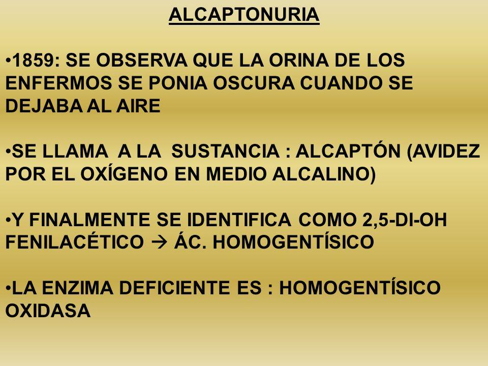 SEGÚN EL SISTEMA DE TRANSPORTE ALTERADO, SON LAS DISTINTAS ANORMALIDADES: TIPO I NO HAY TRANSPORTE DE O – L – A TIPO II NO SE ABSORBE NINGUNO DE LOS 4 AAC TIPO III NO SE ABSORBE CIS -EN INTESTINO LOS AAC QUE NO SE ABSORBEN SON UTILIZADOS POR LA FLORA INTESTINAL L- O- A SON DESCARBOXILADOS POR LAS BACTERIAS Y PRODUCEN: DIAMINAS CADAVERINA Y PUTRECINA -DE LA DEGRADACIÓN DE: -L PIPERIDINA A PIRROLIDINA -LA ABSORCIÓN DE L-CISTEÍNA ES NORMAL DISTINTO MECANISMO DE TRANSPORTE